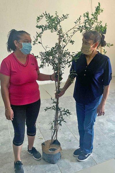Fruit tree recipient