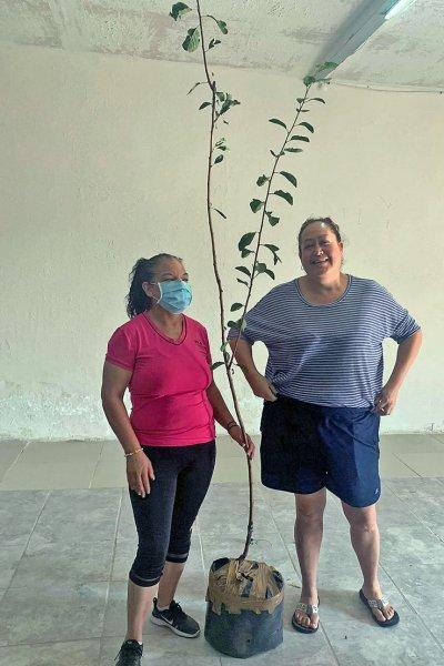 Juana Flores presents another tree