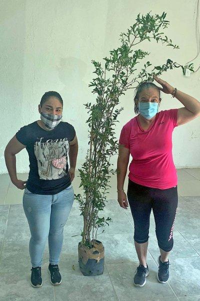 Trees enliven border community