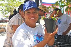 Juana Flores distributes tomato seedlings.